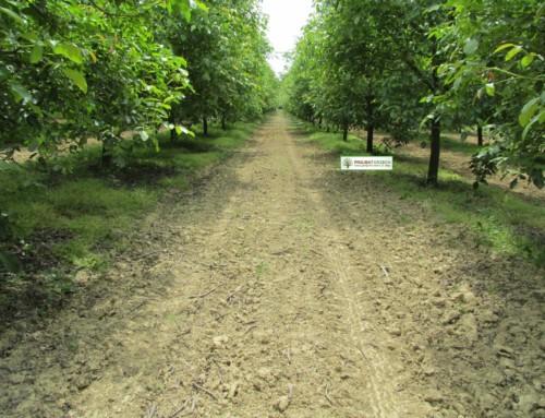 Zapraszamy na spacer po sadzie